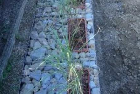 gabion planter idea
